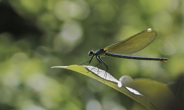 5 Alat Pernapasan pada Serangga, Simak Selengkapnya!